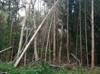 Soit l'arbre grandit, soit il meurt.